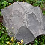 """Big rock"" Gabriele - 2013"
