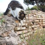 """""""Cats 1"""" Gabriele - 2013"""