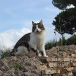 """""""Cats 2"""" Gabriele - 2013"""