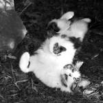 """""""Cats 4"""" Gabriele - 2013"""